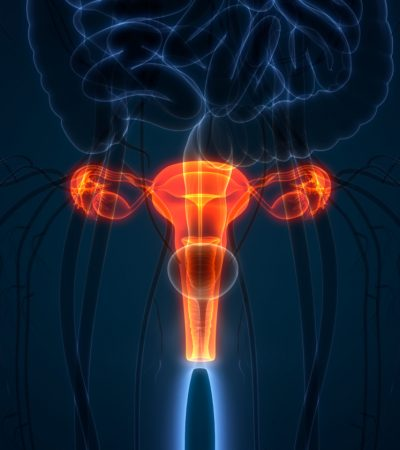 3D Illustration of Female Reproductive System Anatomy